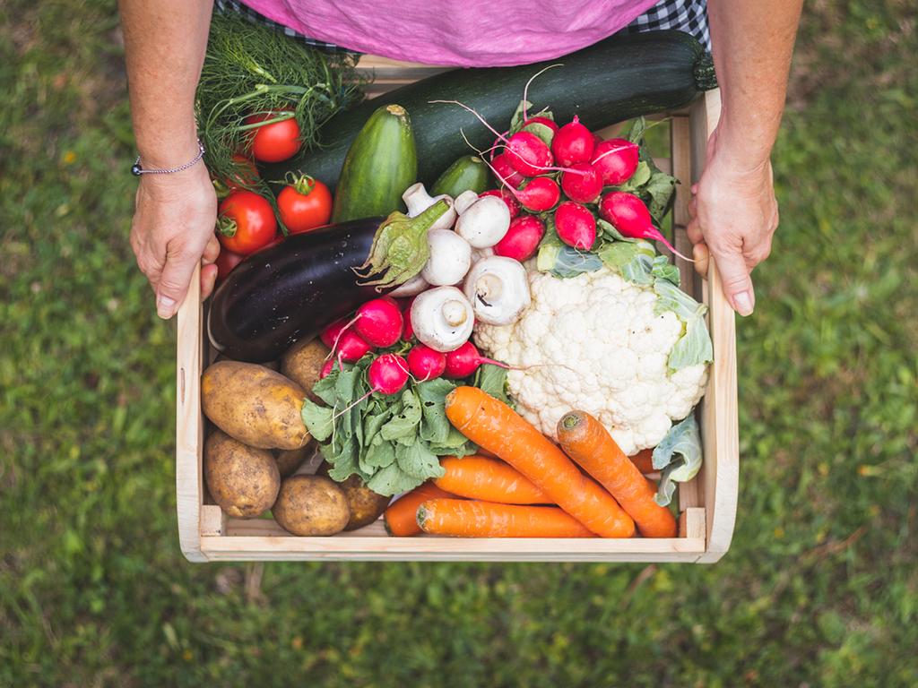 Alimentos sustentables: clave para alimentar a los más necesitados