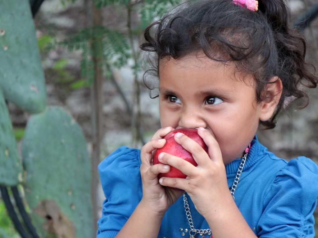 Qué es Hambre Cero: 5 pasos para poner fin al hambre en el mundo