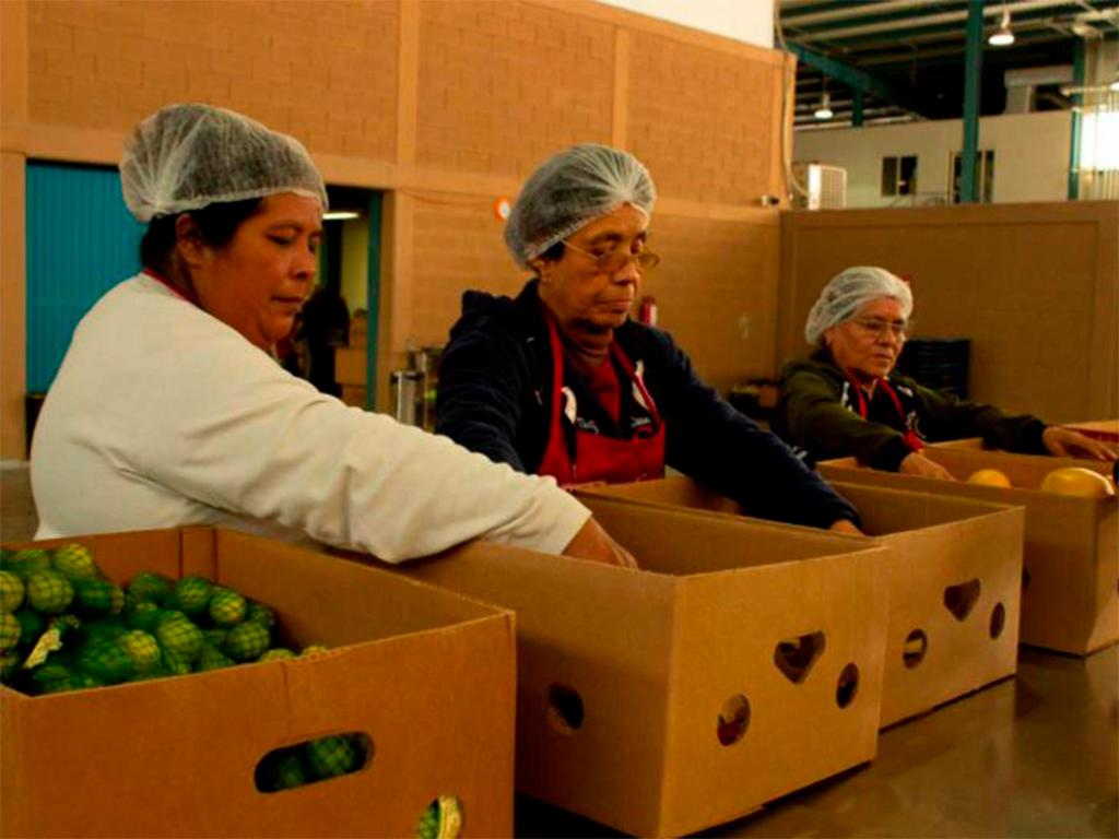 10 actividades voluntarias que puedes realizar en Cáritas de Monterrey