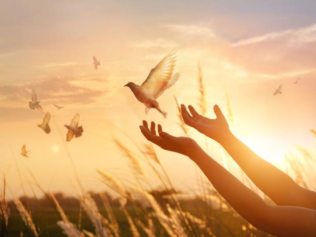 Principios de la paz que puedes practicar para mejorar tu entorno